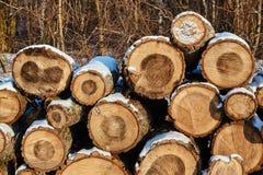 Куча отрезанной древесины в зиме Стоковые Фото