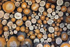 Куча отрезанных ветвей стоковое фото