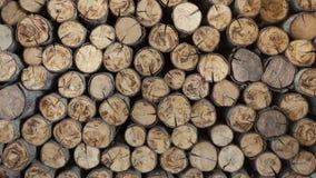 Куча отрезанных стволов дерева давая славный взгляд концентрического y Стоковое Изображение