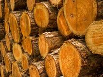 Куча отрезка стволов дерева вниз Стоковая Фотография
