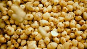 Куча очищенных картошек в увеличении с новыми одними падая в его видеоматериал