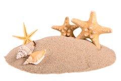 Куча песка с seashells и морскими звёздами Стоковое фото RF