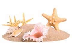 Куча песка с seashells и морскими звёздами Стоковые Фото