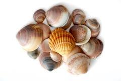 Куча покрашенного взгляд сверху seashells Стоковые Фотографии RF