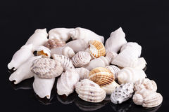 Куча различного вида малых раковин моря изолированных на черной предпосылке Стоковые Фотографии RF