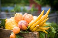 Куча различного крупного плана цитрусовых фруктов стоковые фото