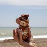 Куча раковины наяды в руке на предпосылке моря Стоковое Фото