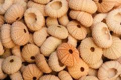 Куча раковин мальчишкаа моря Стоковое Изображение