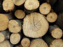 Куча древесины для огня в зиме Стоковое Фото