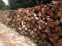 Куча древесин Стоковые Фото