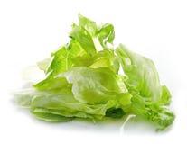 Куча салата айсберга Стоковые Фото