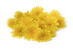 Куча свежих желтых цветков одуванчика Стоковая Фотография RF