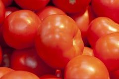 Куча свежих зрелых красных томатов без ветвей стоковое изображение rf