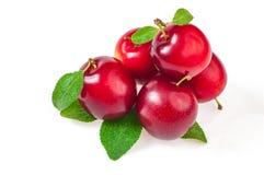 Куча свежих зрелых плодоовощей, красных слив с листьями, концом вверх на w Стоковые Изображения RF