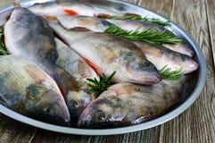 Куча свежих сырых рыб на подносе Конец-вверх вырезуб Стоковое фото RF