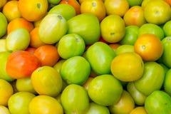 Куча свежих томатов стоковая фотография