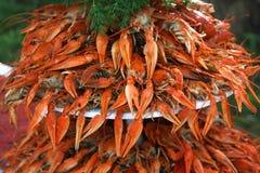 Куча свежих ых crayfish с зеленым укропом Стоковое Фото