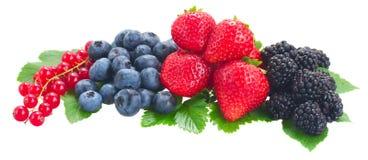 Куча свежих ягод стоковое фото rf