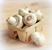 Куча свежих champignons гриба Стоковые Изображения