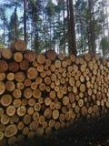 Куча свежо отрезанного тимберса входит в систему лес - вносящ в журнал, лесохозяйство стоковое фото rf