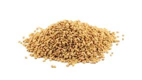 Куча семени пажитника вращая на бело- семени пажитника использована как приправа в кухне сток-видео