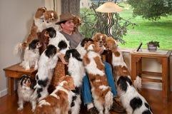 куча собаки Стоковая Фотография