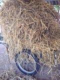 куча соломы на тележке Стоковое Фото