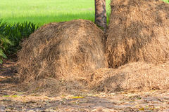 Куча соломы на ricefield Стоковая Фотография RF