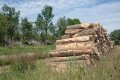 Куча стволов дерева в лесе Стоковая Фотография