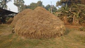 Куча сухих солом риса стоковое фото