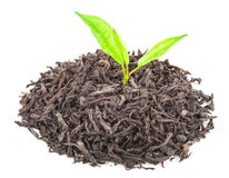 Куча сухого черного чая с листьями зеленого чая стоковое изображение rf