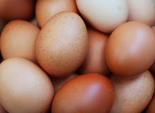 Куча сырцового свежего цыпленка Брайна Eggs предпосылка Стоковое Изображение RF
