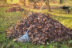 Куча упаденных листьев в дворе стоковые фотографии rf