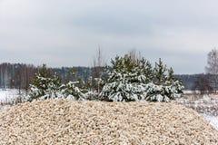 Куча щебня между соснами покрытыми с снегом Стоковая Фотография RF