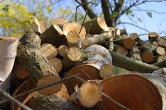 Куча cutted древесины стоковая фотография rf