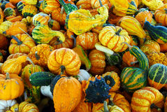 куча gourd Стоковое фото RF