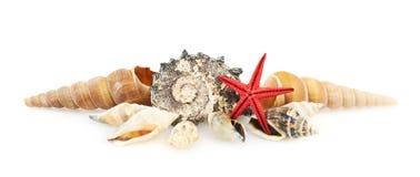Куча seashells Стоковая Фотография RF