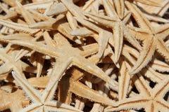 Куча Starfish Стоковое Фото