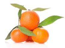 Куча tangerines на белой предпосылке Стоковое Фото