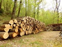 Кучи журнала в древесинах Стоковые Фото