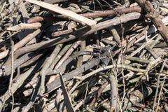 Кучи отрезка сушат ветви деревьев Стоковое фото RF