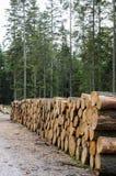 Кучи тимберса вдоль дороги в лесе Стоковая Фотография