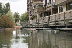 Кулачок Англия реки Стоковые Изображения RF