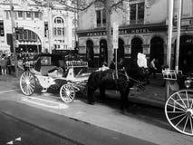 кудели лошади старые стоковая фотография rf