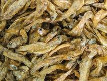 Кудрявые зажаренные и посоленные малые рыбы с косточкой Стоковая Фотография RF