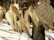 Кудрявые листья Стоковые Изображения RF