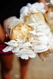 Культивирование гриба растя в культивировании гриба фермы в грибе органических ферм свежем растя на специальной почве Стоковое Фото