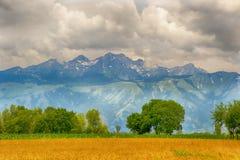 Культивирование пшеницы Стоковые Изображения