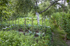 Культивирование различных овощей и плодоовощ Стоковые Изображения RF