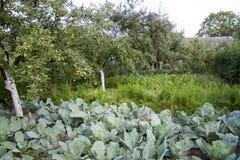 Культивирование различных овощей и плодоовощ Стоковое Изображение